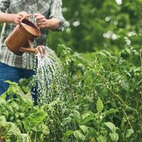 Expert tips to maximize your victory garden Grand Island,Ne